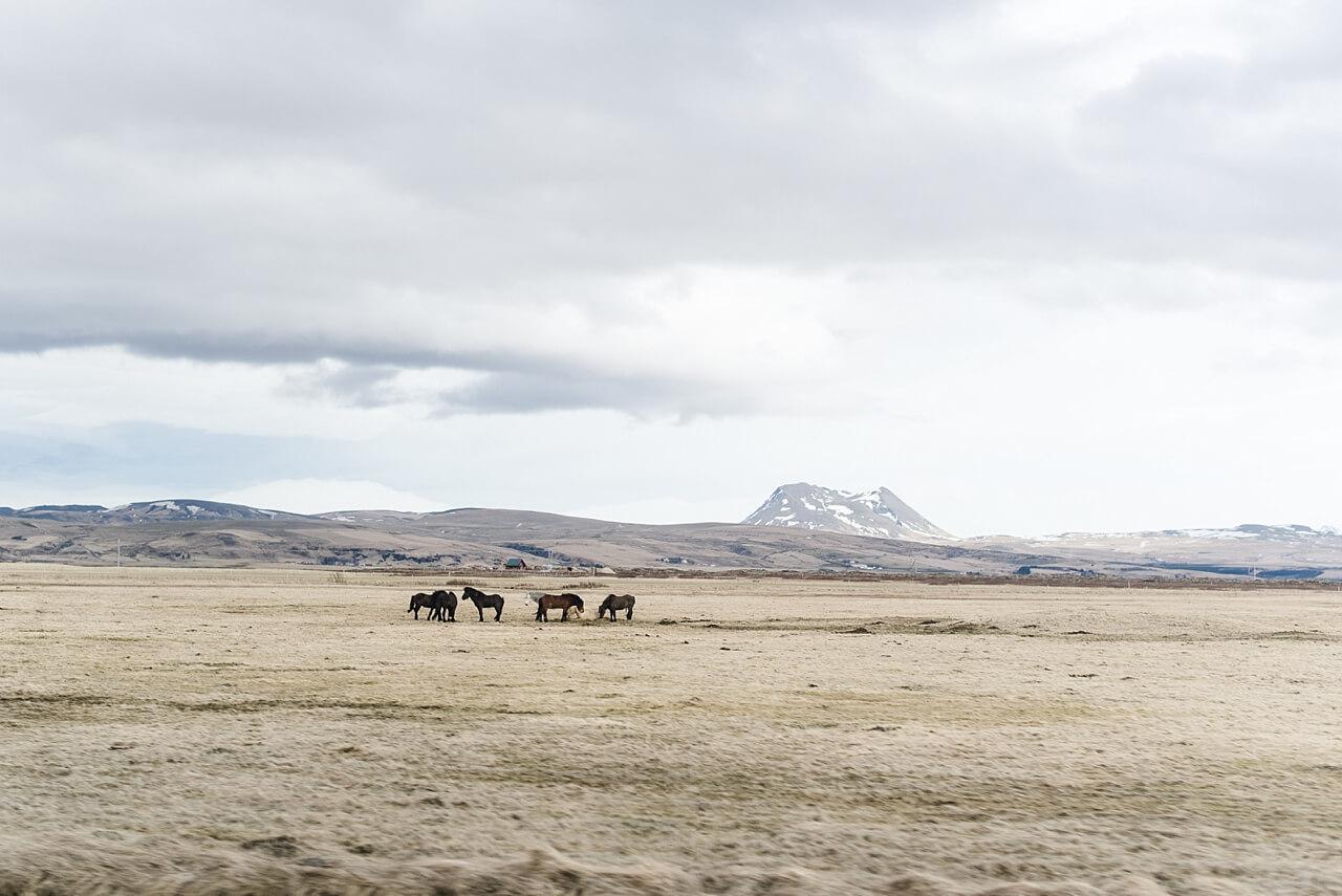 Rebecca Conte Fotografie: Intime Hochzeit auf Island 25